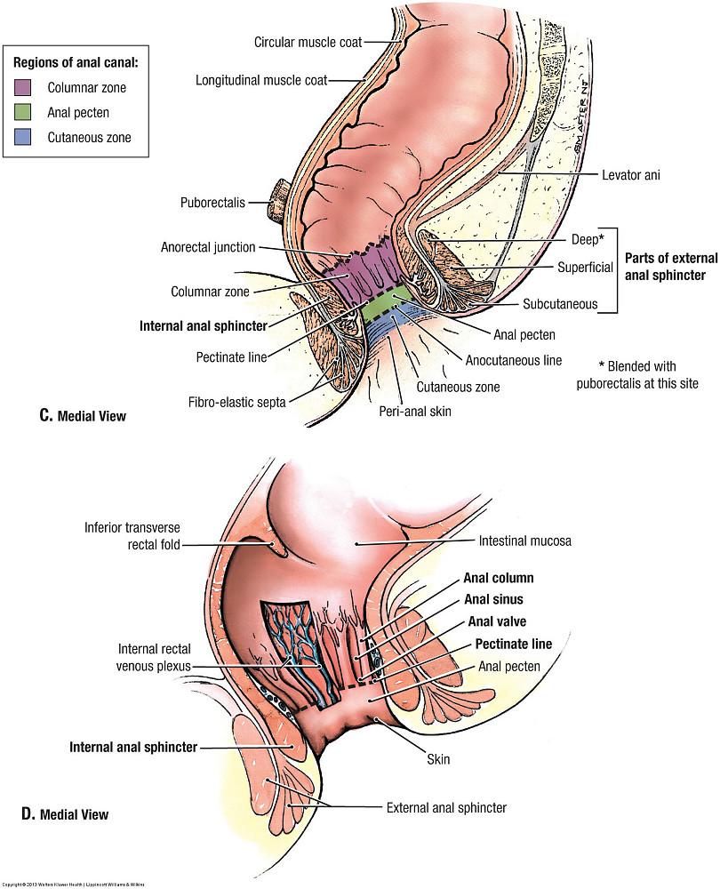Duke Anatomy - Lab 9: Pelvic Contents
