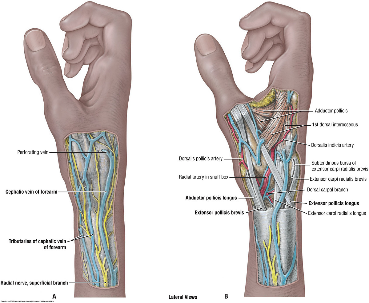 Duke Anatomy - Lab 11: Intrinsic and extrinsic flexors of the ...