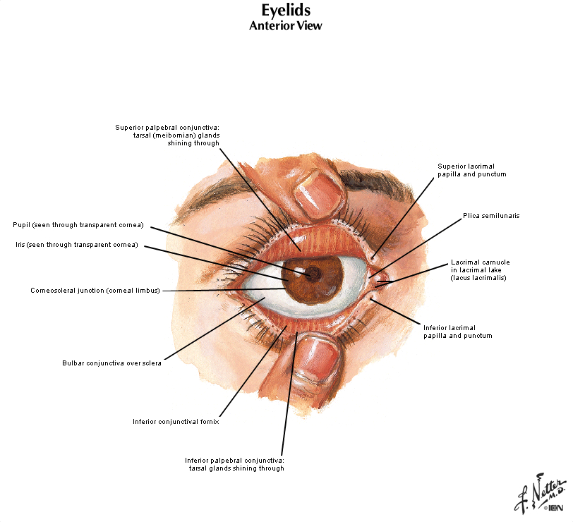 Duke Anatomy Lab 20 Eye Ear