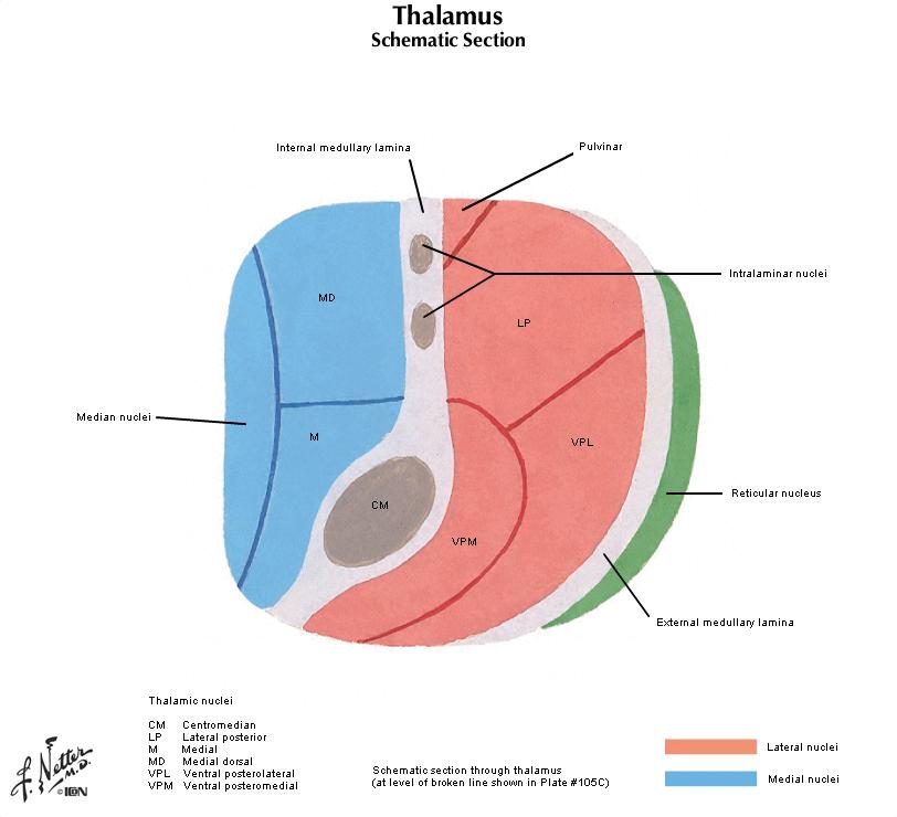 Duke Pathology - Nervous System Part 1