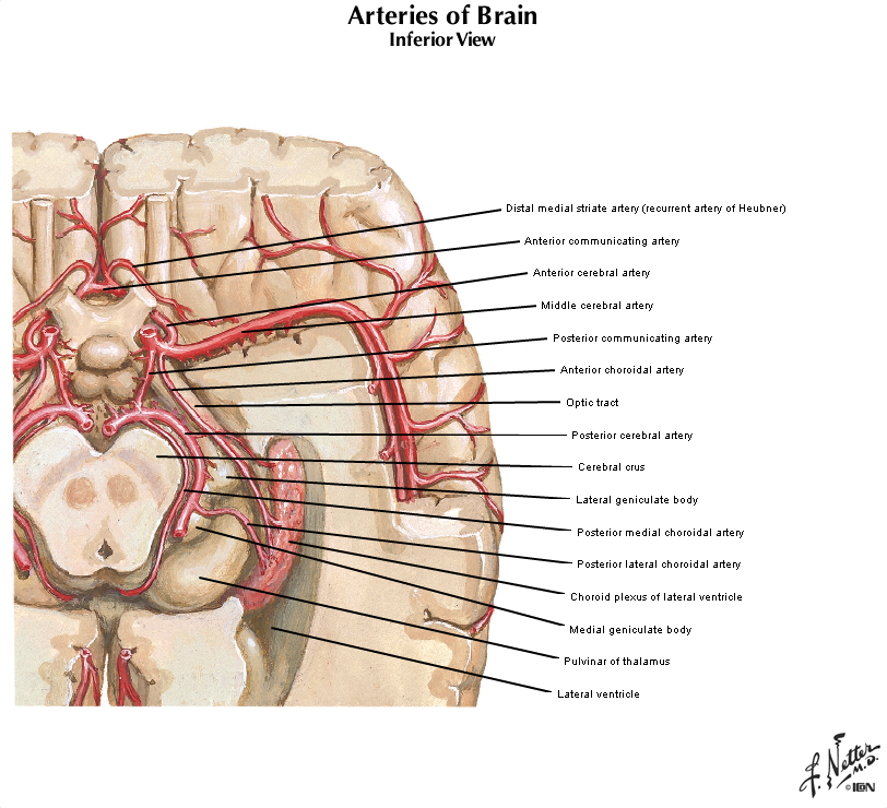 Duke Pathology Case 504 Part 2