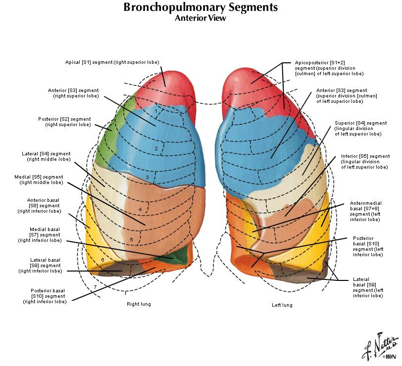 Duke Pathology Pulmonary System