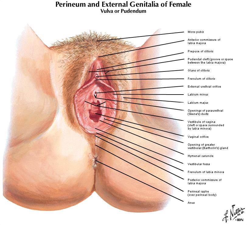 Duke Anatomy - Lab 9: Perineum