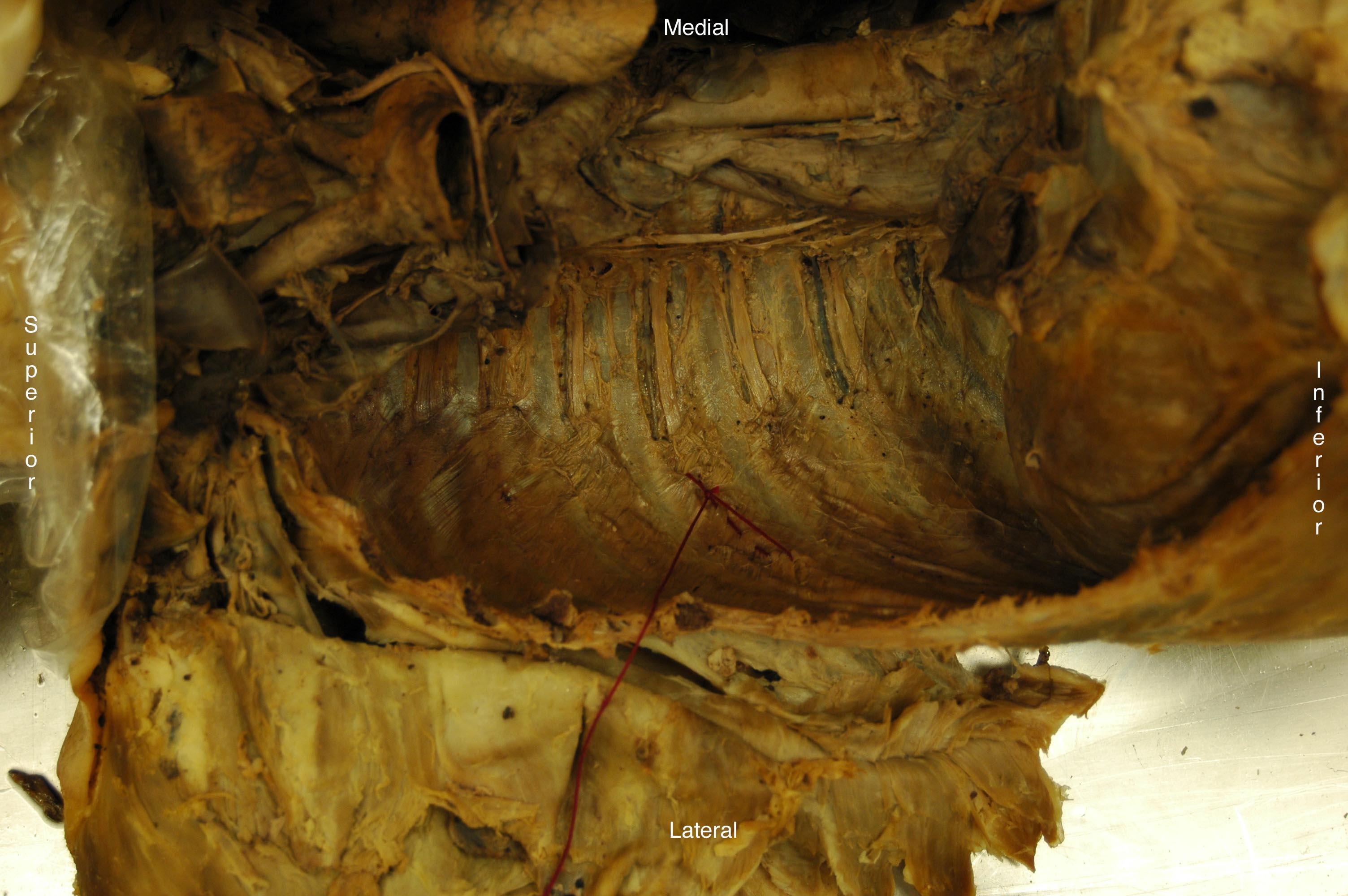 Index Of Anatomysitepartsanatomytablespracticals